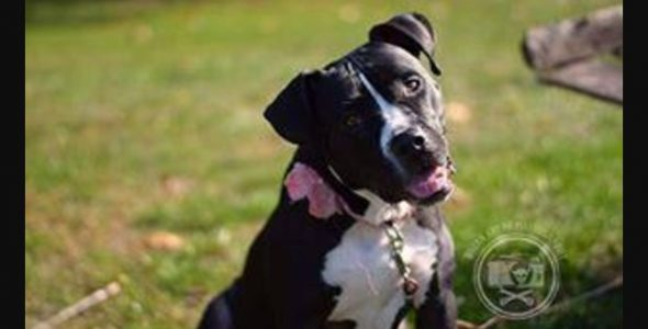 Babette Is a Beautiful Dog Who Just Wants a Family of Humans to Love and Protect