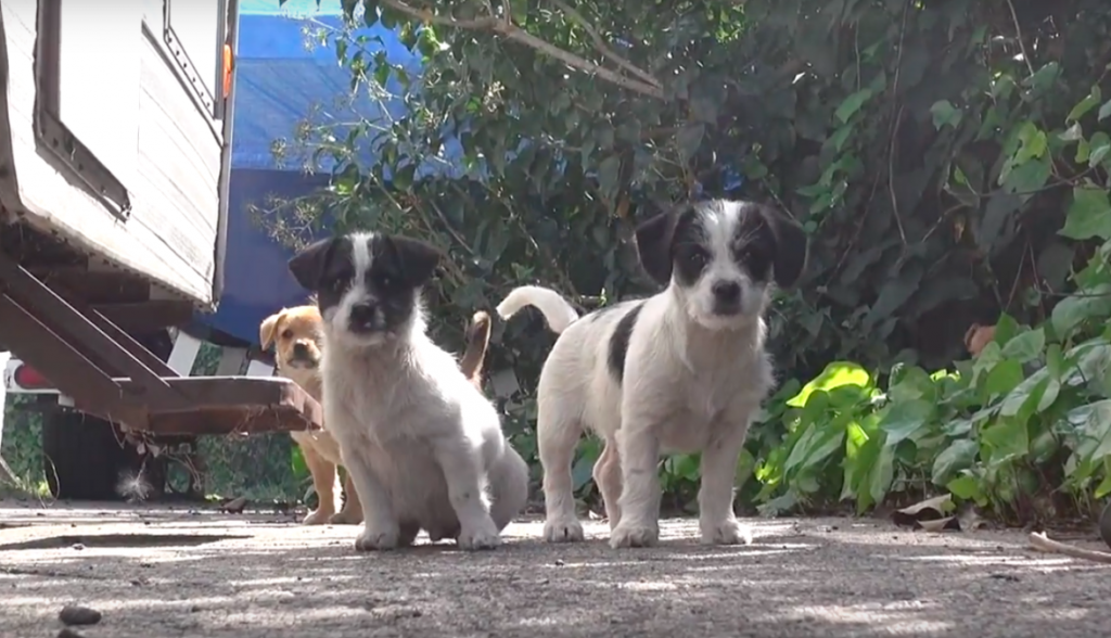 Dog Left Her 5 Puppies To Look For Food And Never Came Back. Luckily, They Ended Up In Good Hands