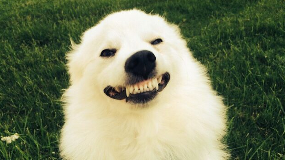 Dad asks to see dog's 'creepy' smile, and it doesn't disappoint