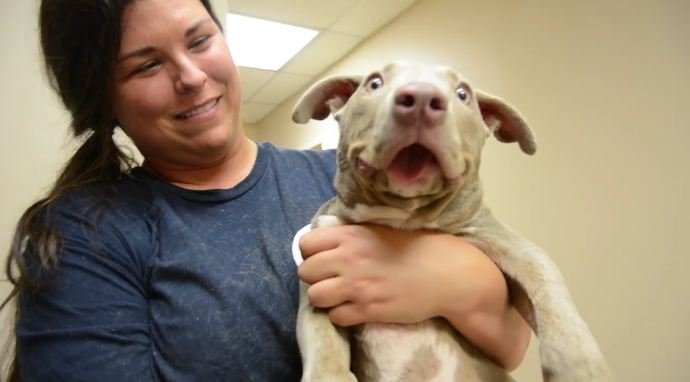 Pittie with Adorable Overbite Adopted Within Hours After