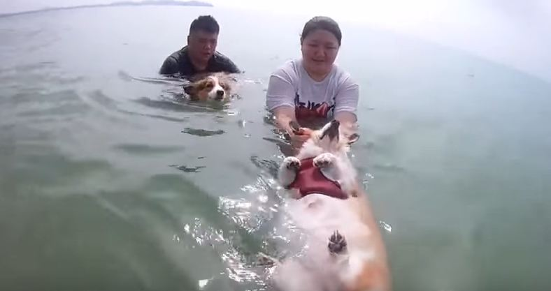 Corgi Gets to Swim in the Ocean for the First Time, and We Think Someone's a Fan…
