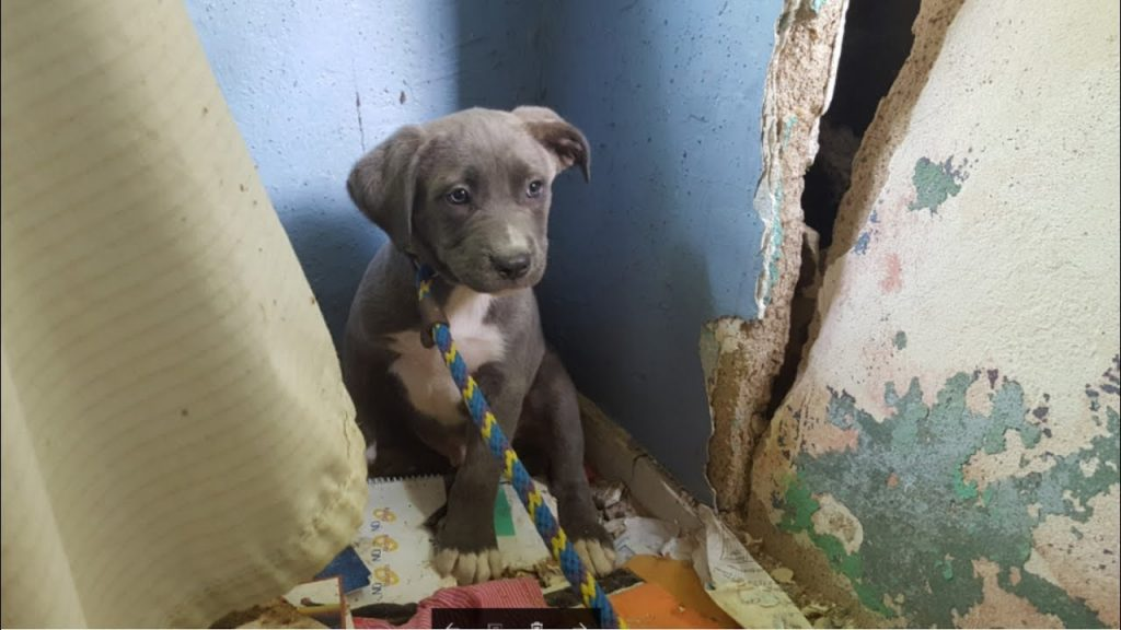 Rescuers go to save puppies from a crumbling, abandoned house