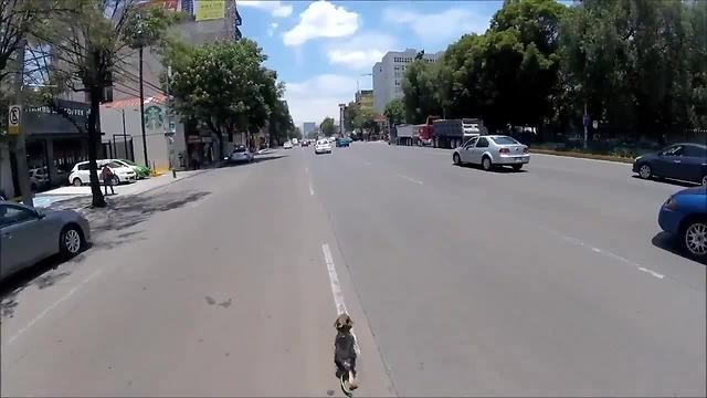 Dog breaks free from owner and runs down busy streets of Mexico City