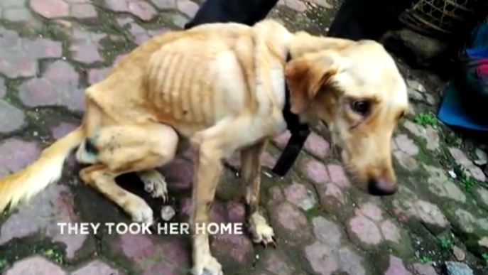 Man no longer wanted his dog, threw her in a storm drain and left her there to die