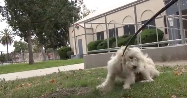 He Was Skittish And Wouldn't To Let Anyone Near Him, But His Rescuers Refused To Give Up!