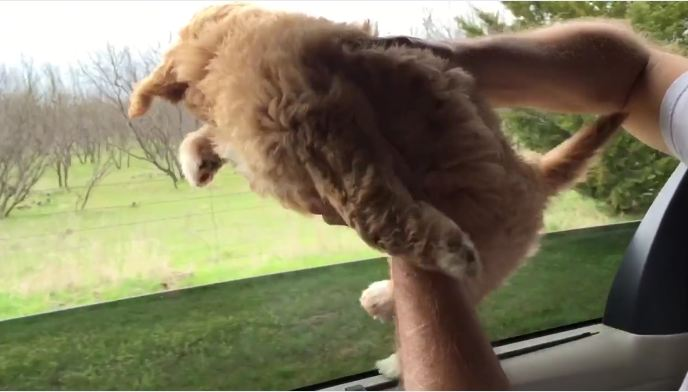 Puppy's held up beside open window, and it's his little feet that have everyone laughing