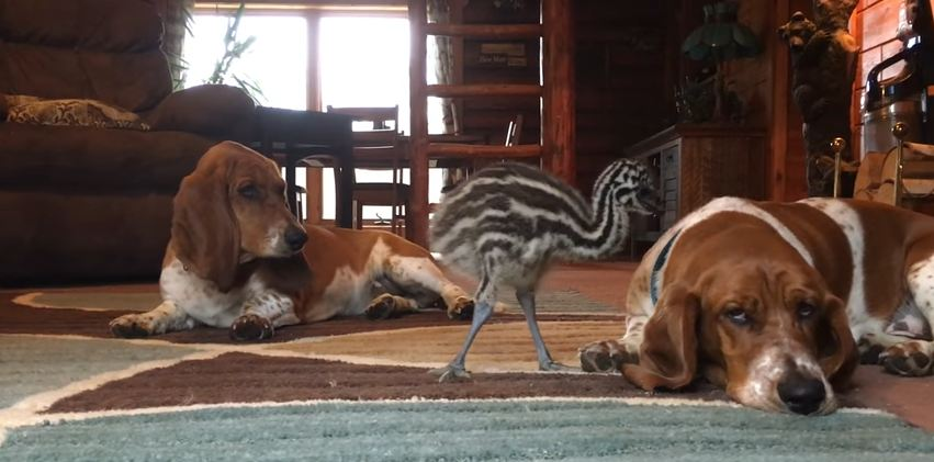 If You've Ever Been Too Tired To Play With The Kids, These Hounds Know Your Struggle