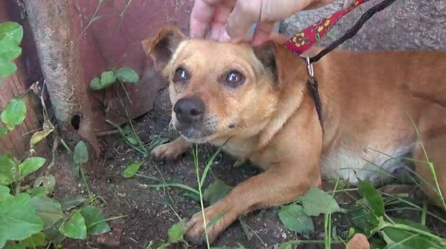 Three dogs left on the streets with nowhere to go after owner passes away
