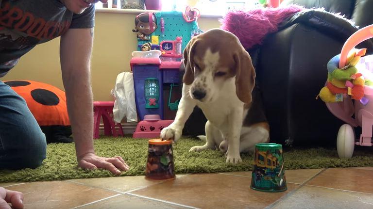 Teaching cute dog how to gamble