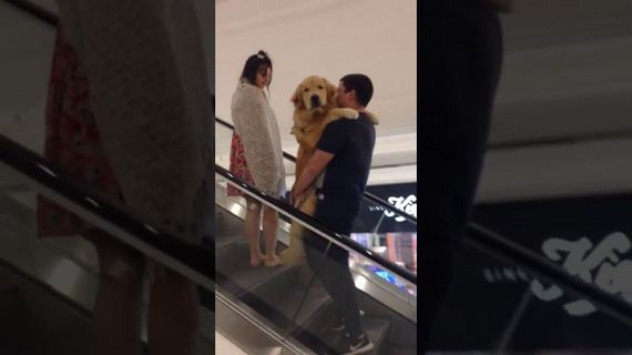 Adorable Golden Retriever Gets Carried up Escalator