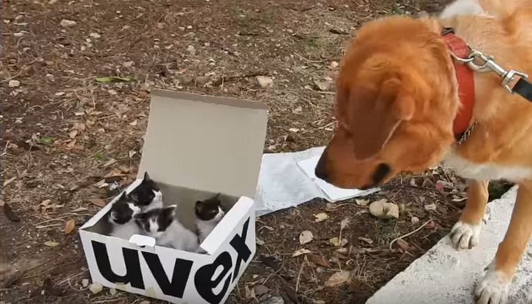 Dog finds box on the side of the road, becomes the best foster dad
