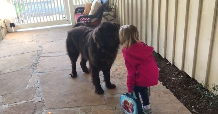 Mom has her little girl say goodbye to the dog every morning before school
