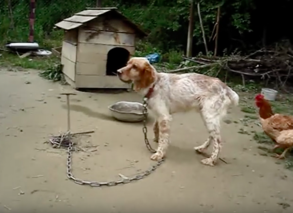Chained Up For 5 Years, He Could Barely Stand Up. But Now, He's All Smiles!