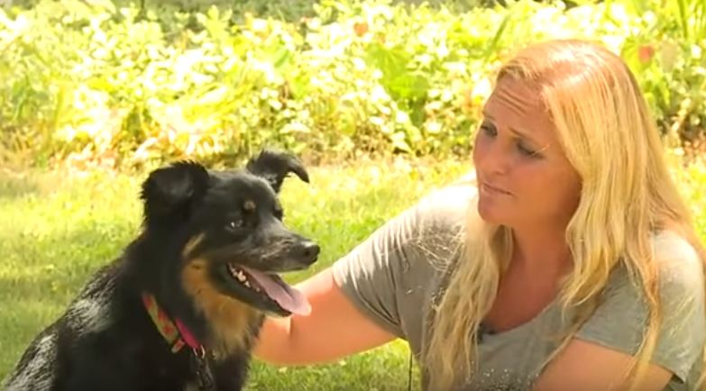 Dog had been on the run for 3 years when finally captured — then they scanned for a microchip