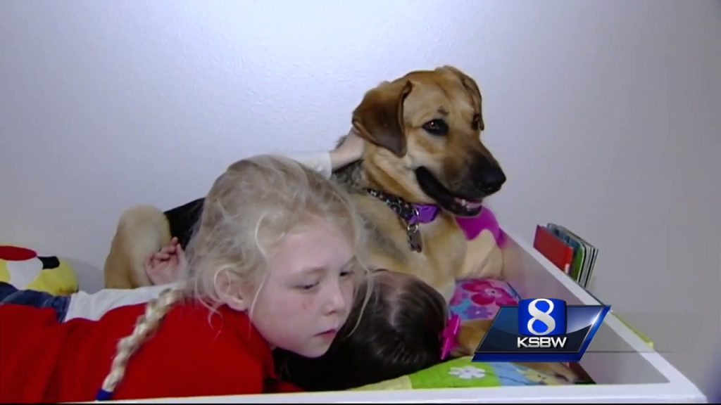 They tried for months but couldn't get close to this stray, but then a little girl tried