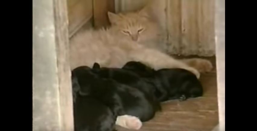A dog had a litter of puppies, but the neighborhood cat stole them all