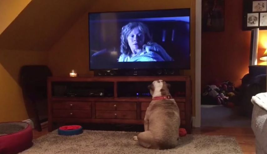 Bulldog takes on one of horror's scariest monsters!