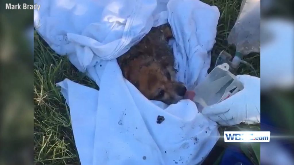 Firefighters Revive Dog After Saving Him From Burning Home