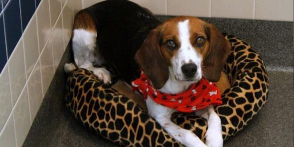 Franklin County Dog Shelter Seeks Help as They Hit Capacity With Rash of Lost Dogs
