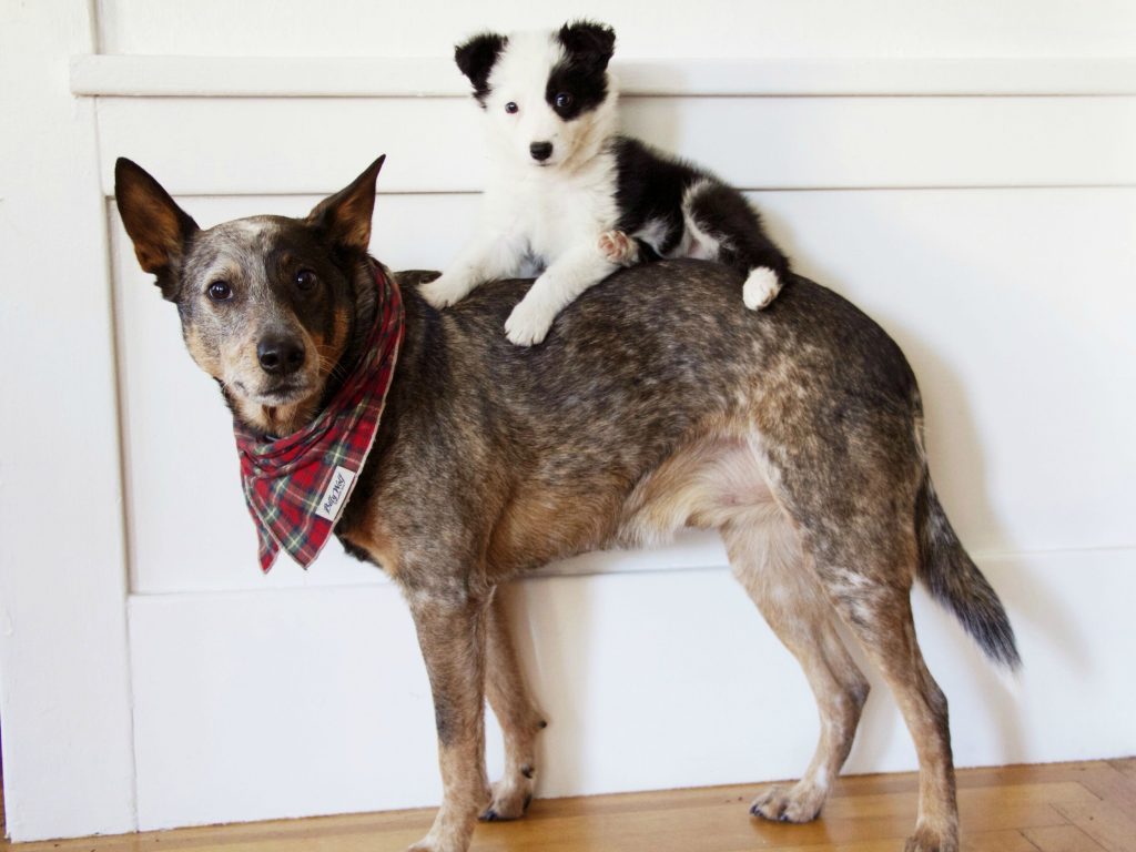 Make Way For Love: Watch These Dogs Welcome Their Furry New Siblings