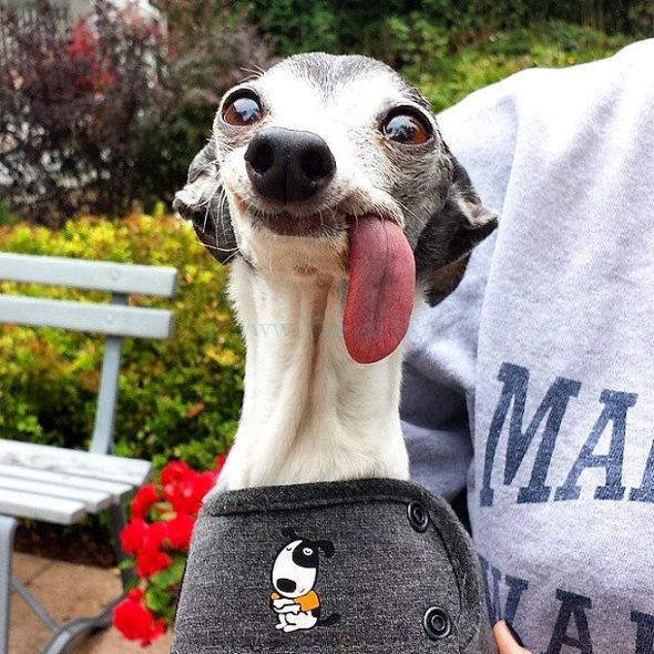 People Were Asked to Photoshop This Long-Tongued Doggo, and the Results Are Hilarious