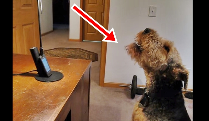 Dog calls mom to express how much he misses her, has everyone in stitches