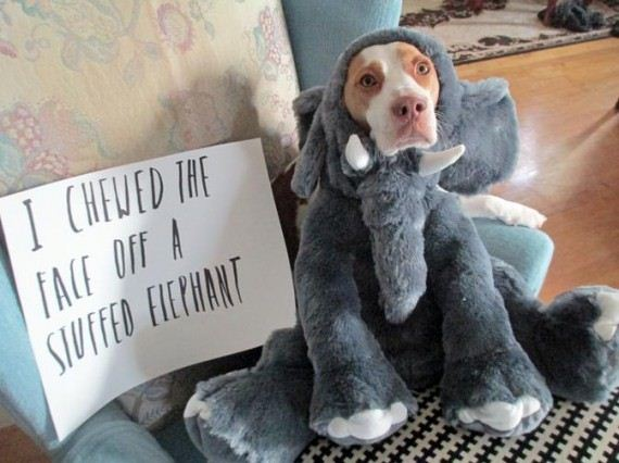 These 18 dogs prove life is far more interesting with a pet