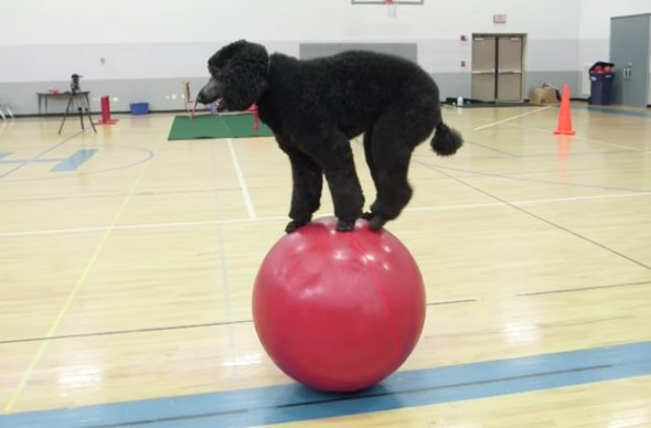 Your Dog May Be Able to Do Tricks, but Sailor Takes it to a Whole new Level