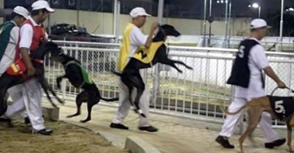 'World's Deadliest Track' Finally Closed After Years Of Greyhound Torture And Killing