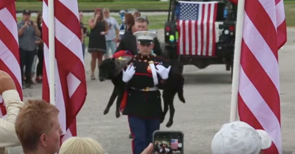 Veteran Dog Cena Laid To Rest After Memorial Parade And Jeep Convoy
