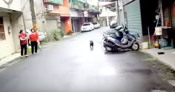 After 6 Days On The Streets, This Pup Perks Up When He Hears A Familiar Sound