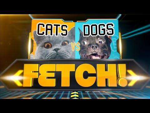 Talking dogs and cats discuss playing fetch, and it has me in stitches over here
