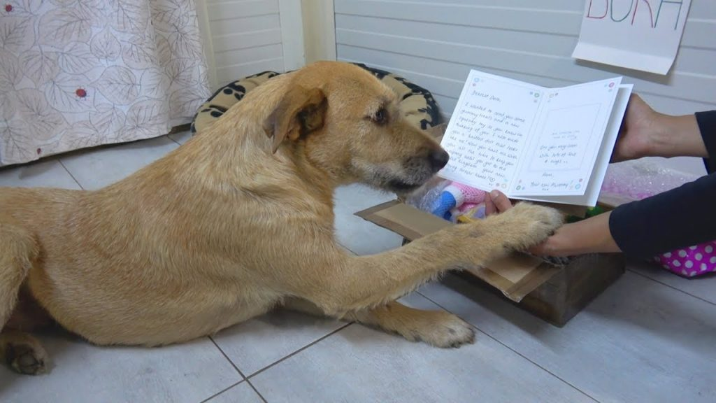 Sad shelter dog gets sweet letter from adoptive family
