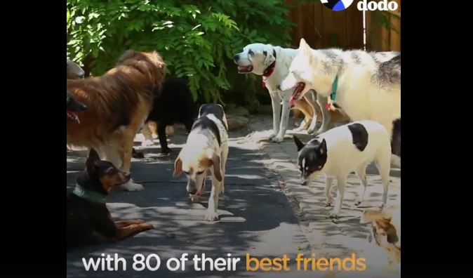 One couple changed their lives to allow these old dogs to live out their golden years in style
