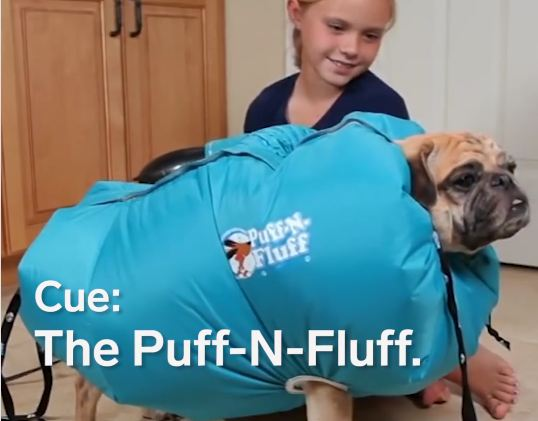 Would You Try This Crazy Contraption on Your Dog?