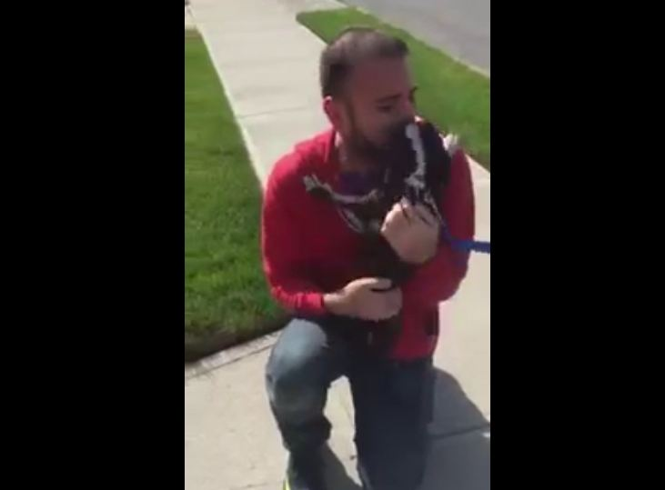 Dog Can't Contain Happiness When Reunited With Owner