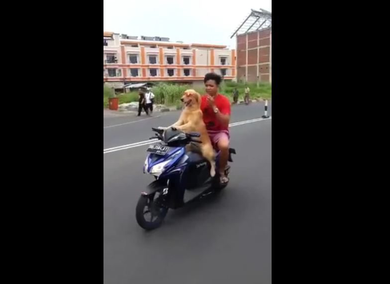 Dog Walking with Owner on Motorcycle