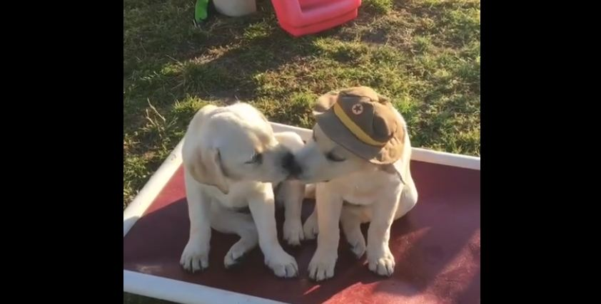 Puppies give each other loving kisses