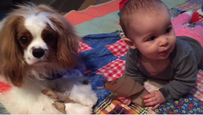 The dog's chewing on a paper towel roll, but it's the baby that has dad laughing