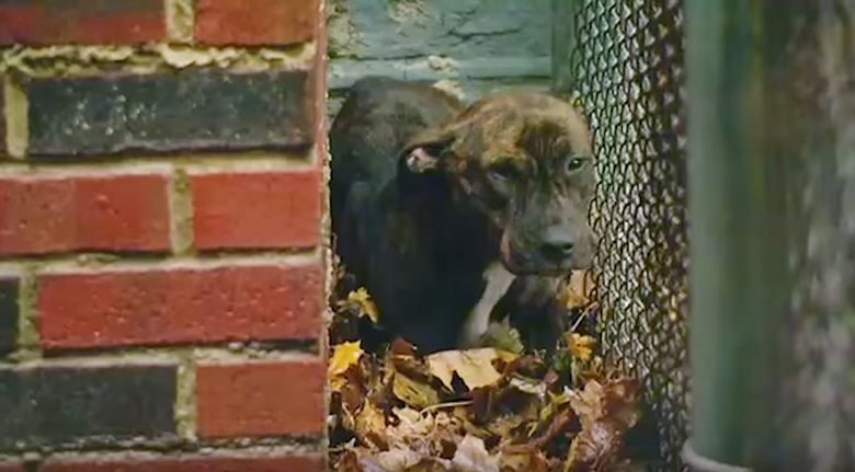 Cops had given up on finding this abandoned dog — but then they took one last look