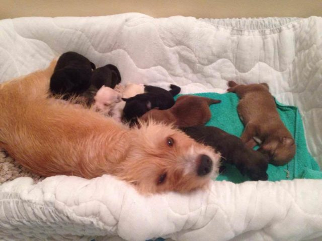 Mama Dog Who Lost 2 Of Her Pups Adopts Orphaned Litter Of 6