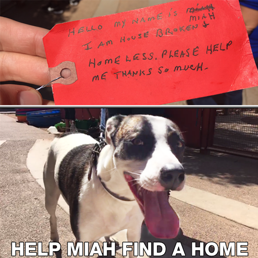 Dog Abandoned At Gas Station With Note Around Her Neck Gets A Second Chance