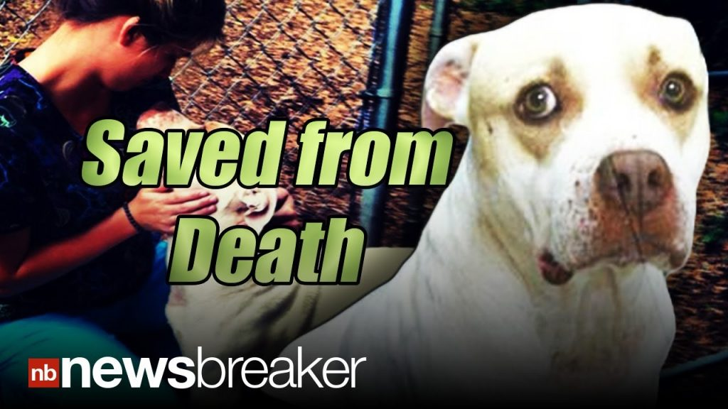 Pit bull wanders up to woman hoping she will look inside her mouth