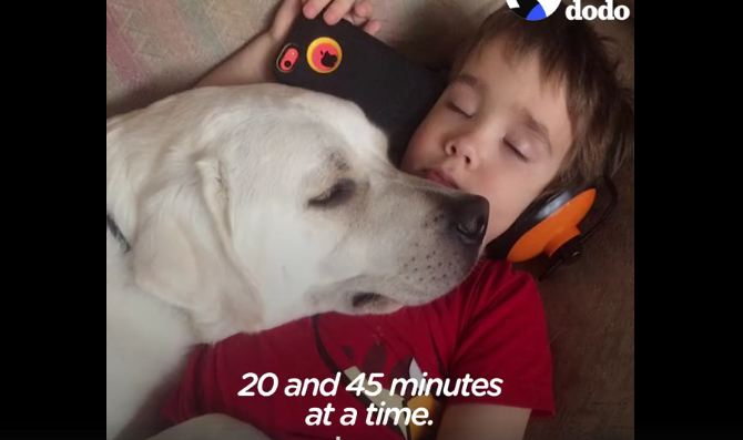 Autistic boy couldn't ever sleep, then one day a dog laid his head on him