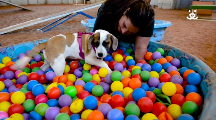 Video of Shelter Dogs Crazy for Their Ball Pit Will Make You Want to Adopt Them All