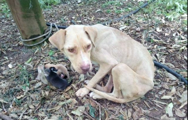 Neglected dog gives birth while tied up in the middle of nowhere