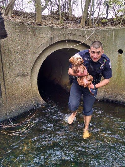 7 Remarkable Times the Police Rescued a Dog Against Steep Odds