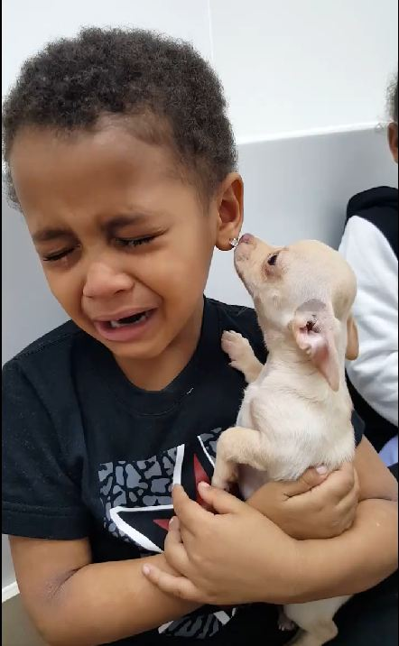 Adorable Toddler Can't Stop Crying Because Puppy is 'So Beautiful'