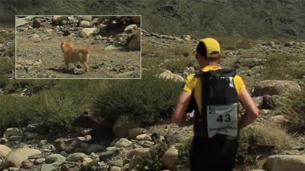 Stray Dog Joins Extreme Marathoner Across the Desert, Won't Leave His Side