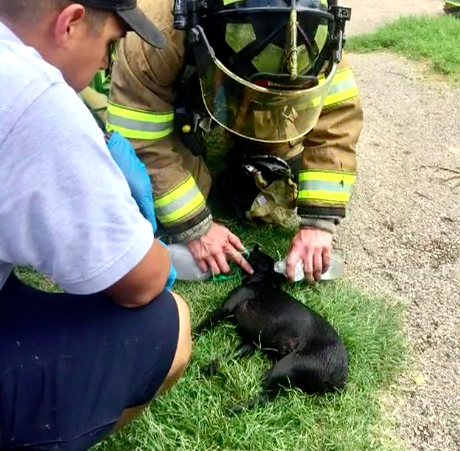 Firefighters Rescue Tiny Dog Trapped In Burning Home
